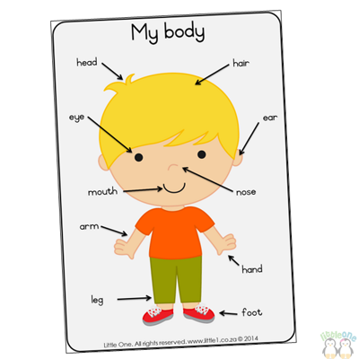 Picture of Theme Wall Chart - My body (boy)
