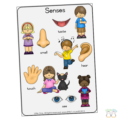 Picture of Theme Wall Chart - Senses