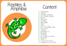 Picture of Theme Activity Book (20) - Reptiles & Amphibians